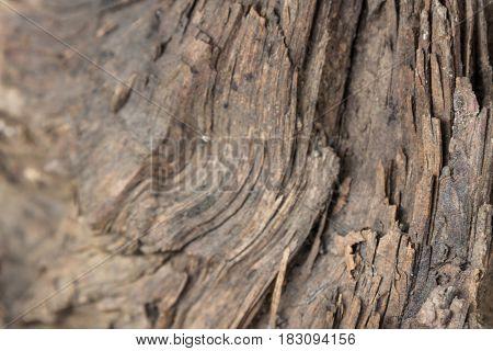 Broken Tree Texture