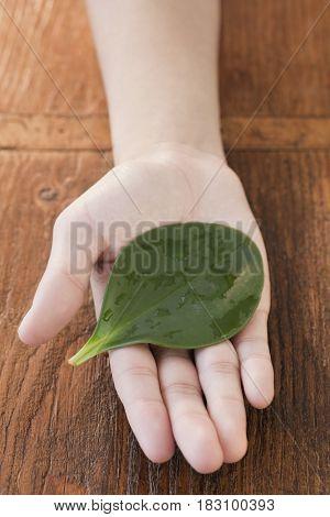 Woman holding wet leaf