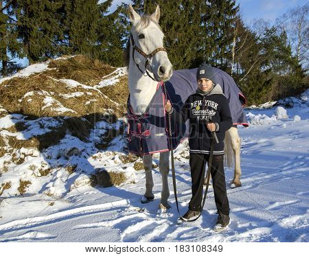 LATVIA, RIGA, DECEMBER, 08, 2016 - The boy takes care of his horse and leads her for a walk on the first snow in Riga, Latvia