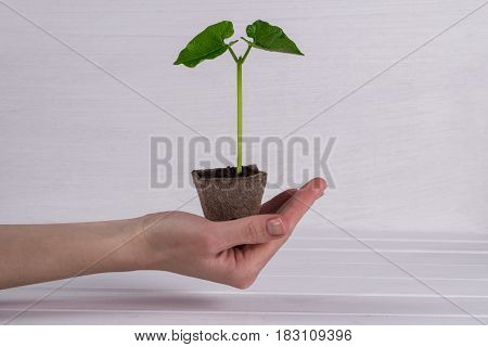 Woman hand holding young green sprout. Springtime concept. New life.