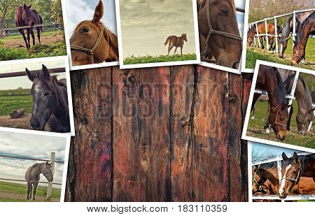 Horses photo collage on wooden background as copy space