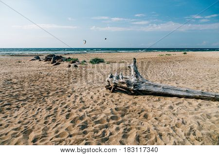 Snag on wild sandy beach of Baltic sea summertime landscape