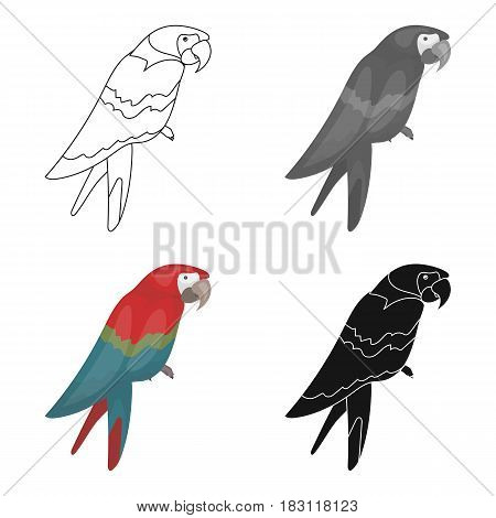 Pirate's parrot icon in cartoon style isolated on white background. Pirates symbol vector illustration.