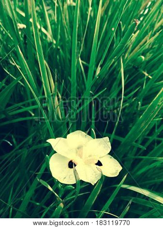 Yellow flower in the green grass