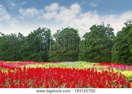 Beautiful floral blooming in the garden Bogor West Java Indonesia
