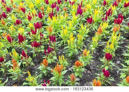 Beautiful plant growing in the flower garden Bogor West Java Indonesia