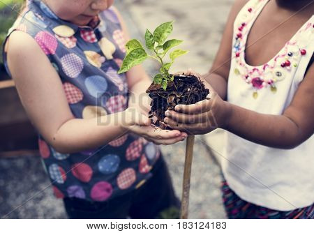 Group of environmental conservation children hands planting