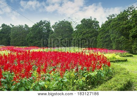 Landscape colourful flowers blooming in the garden Bogor West Java Indonesia