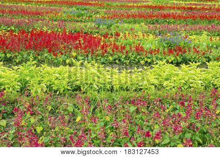 Colorful flowers in the beautiful garden Bogor West Java Indonesia