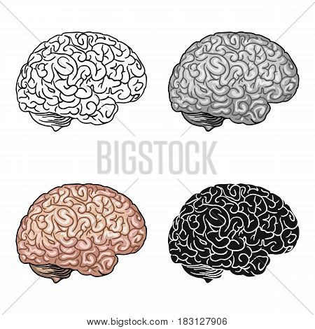 Human brain icon in cartoon style isolated on white background. Human organs symbol vector illustration.