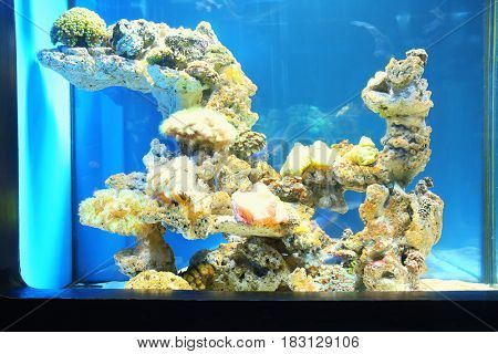 Beautiful exotic corals in aquarium