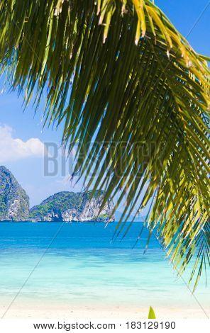 Island Lagoon Palms Overhanging