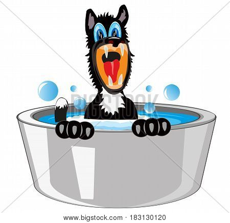 Black dog in capacities with water is washed
