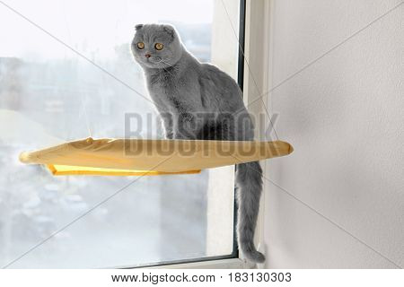 Cute curious pet resting on window mounted cat bed at home
