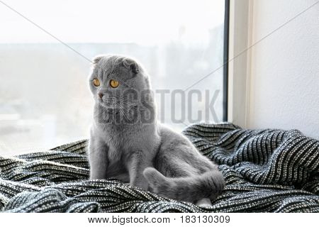 Cute cat resting on window sill at home
