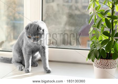 Cute curious pet resting on window sill at home