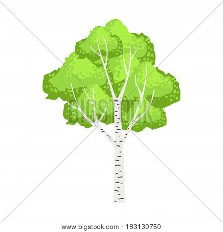 Green birch tree, element of a landscape. Colorful cartoon vector Illustration isolated on a white background