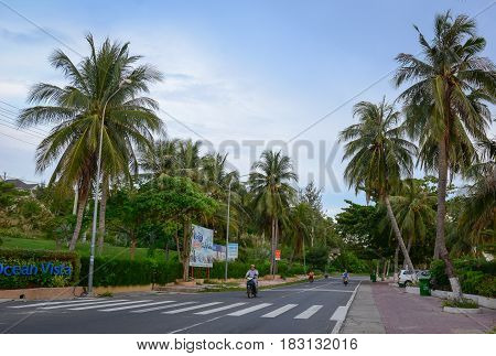 Rural Road With Many Coconut Trees