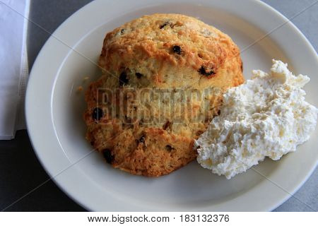 Simple white dish with fresh baked scone and whipped cream