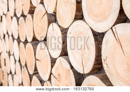 Horizontal Background Of Wood Logs Of Different Sizes