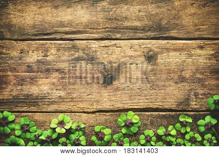 Clover leaves on the old wooden background. Lucky shamrock. St.Patrick's day background with copyspace for text