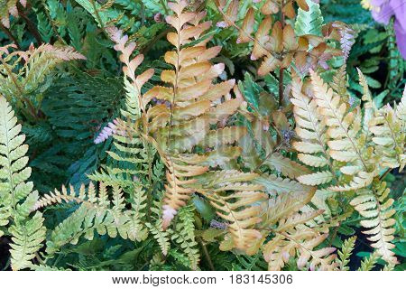 green fern in the garden in spring