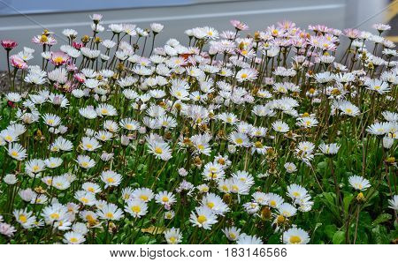 Wild Plants And Flowers At Garden In Spring Time
