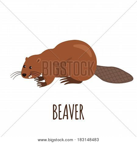 Cute beaver in flat style isolated on white background. Vector illustration. Forest animal. Cartoon beaver.