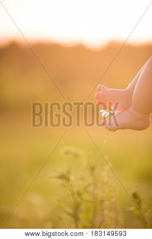 Bare feet of a cute baby on the summer background. Childhood in the farm. Small bare feet of a little baby boy or girl.