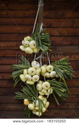 Organic white onions and shallots hanging on wooden background. Harvest. Garden. Health and lifestyle concept.