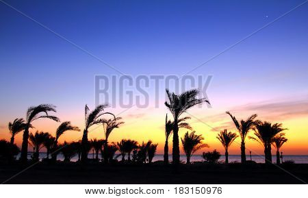 morning landscape before sunrise with palm trees and sea