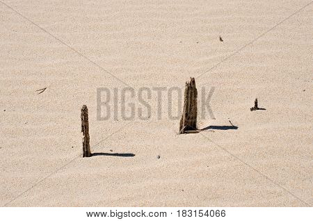 Remains of fence posts buried in the sand