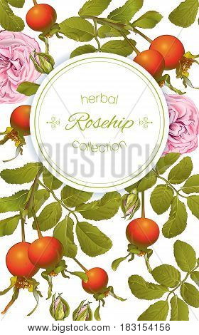 Vector rose hip vertical banner on white background. Design for tea, homeopathy, herbal cosmetics, health care products. With place for text