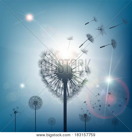 Dandelion with seeds in the form of heart. Stock vector illustration.
