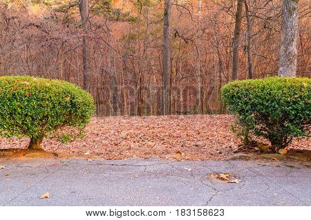 Two bushes on the roadside and autumn park trees behind it