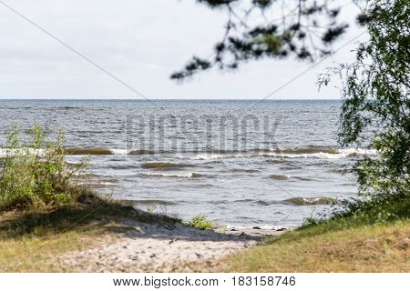Seaside next to the forest during summer