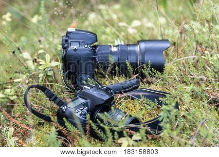 Pair of camera on grass in the wild world