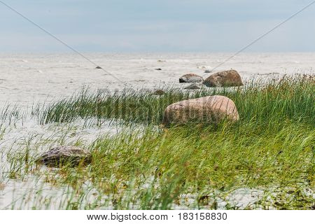 Rocks and sea grass on the seaside during summer time