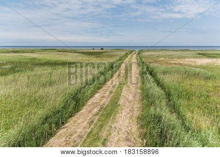 Countryside way to the seaside through the field
