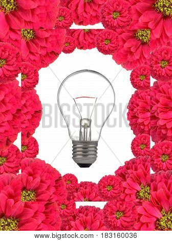 Bulb on a white background and flowers