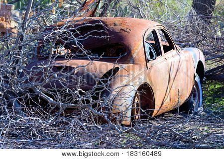 Charcoaled landscape with burnt trees beside a burnt car caused from a wildfire taken in the rural countryside