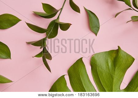 Green twigs isolated