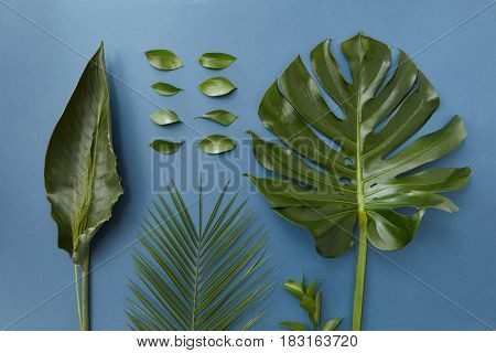 Green leaves isolated