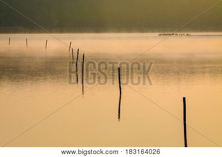 Piles in the lake at morning fog and sun rays.