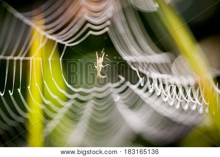 Spider's web on morning rays with water drops.