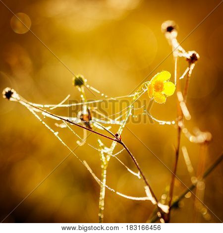 Small meadow flowers with water drops in morning sun rays.