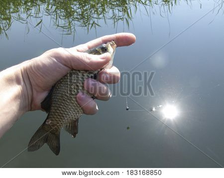 The crucian river fish on a hand