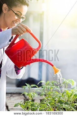 Biologist Watering Seedlings In Greenhouse