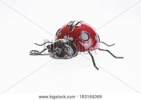 Ladybug isolated on white background, Ladybug closeup