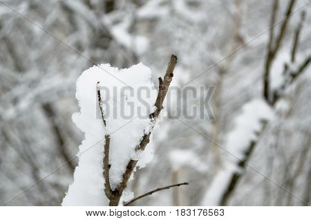 The snow lies beautifully on a lonely branch of a bush. The beauty of natural phenomena.